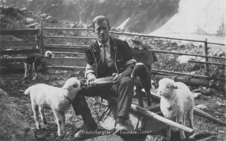 Schafe und Bauer