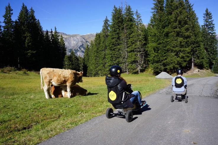 Gemeln neben Kuh